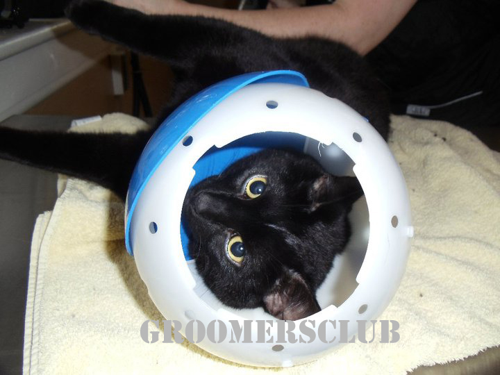 Намордник для кота своими руками из бутылки 79